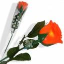 Rose Lumineuse Multicolore